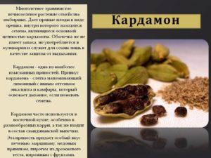 Черный кардамон — полезные и опасные свойства черного кардамона