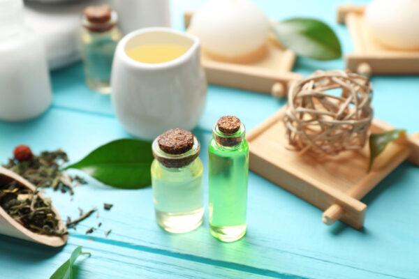 Как вырастить чайное дерево в домашних условиях